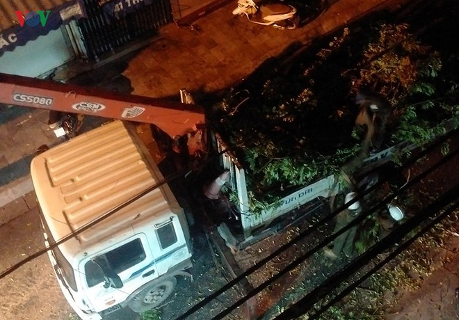 Cây sưa lớn giữa phố cổ Hà Nội bị chặt hạ trong đêm không rõ lý do - Ảnh 1.