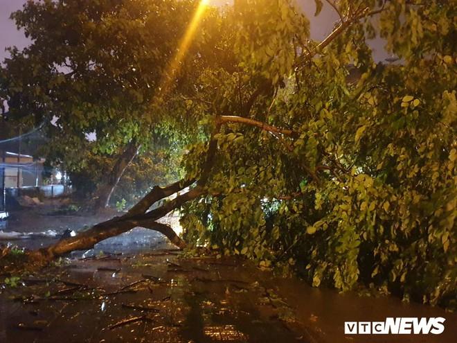 Bão số 3: Móng Cái - Quảng Ninh đang mưa rất to, cây cối bật gốc, đổ rạp trên đường - Ảnh 2.