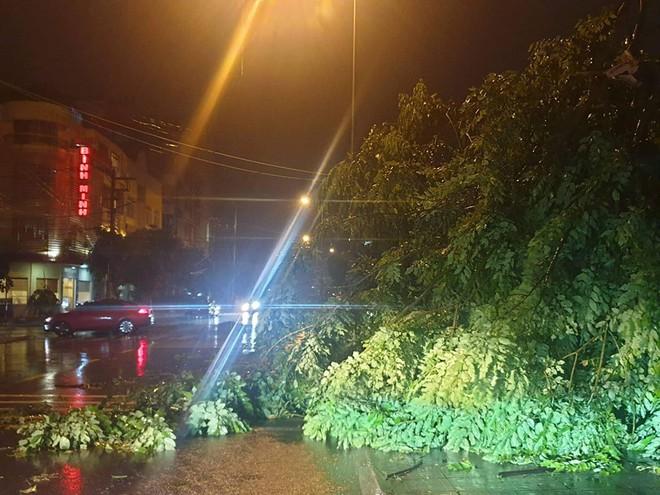 Bão số 3: Móng Cái - Quảng Ninh đang mưa rất to, cây cối bật gốc, đổ rạp trên đường - Ảnh 4.