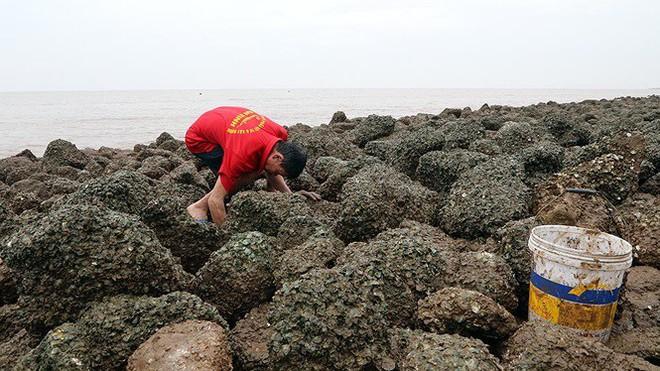 Bão sầm sập ngoài khơi, ngư dân tranh thủ nhặt hải sản trên bờ - Ảnh 3.