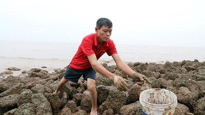 Bão sầm sập ngoài khơi, ngư dân tranh thủ nhặt hải sản trên bờ - Ảnh 4.