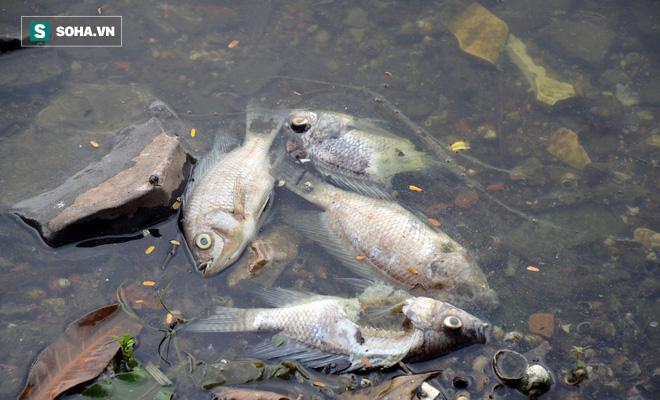 [Ảnh] Cá chết nổi trắng hồ Trúc Bạch, dân bỏ thói quen thể dục quanh hồ, quán xá thưa thớt khách - Ảnh 4.