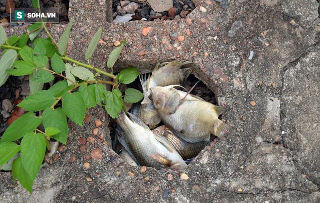 [Ảnh] Cá chết nổi trắng hồ Trúc Bạch, dân bỏ thói quen thể dục quanh hồ, quán xá thưa thớt khách - Ảnh 5.