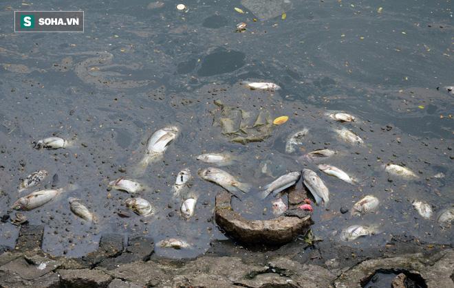 [Ảnh] Cá chết nổi trắng hồ Trúc Bạch, dân bỏ thói quen thể dục quanh hồ, quán xá thưa thớt khách - Ảnh 2.