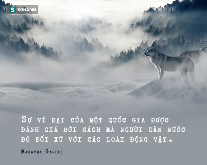 Nhốt con sói săn được ở ngoài vườn trong đêm bão, hôm sau, người đàn ông kinh ngạc trước cảnh tượng nhìn thấy - Ảnh 3.