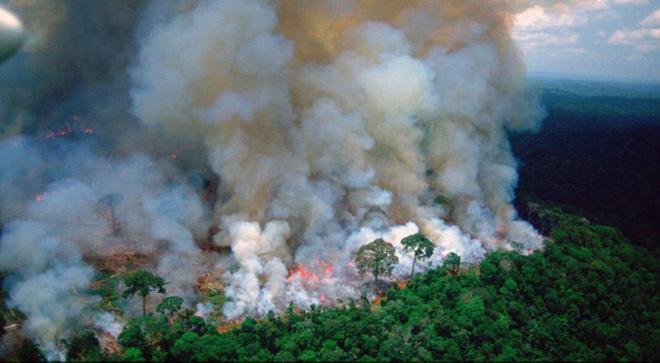 Những hình ảnh đau đớn vì cháy rừng Amazon - Ảnh 2.
