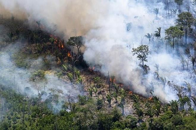 Những hình ảnh đau đớn vì cháy rừng Amazon - Ảnh 3.