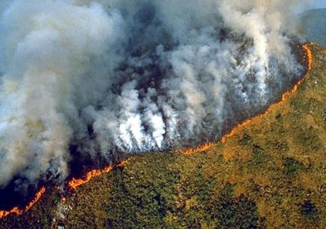 Những hình ảnh đau đớn vì cháy rừng Amazon - Ảnh 4.