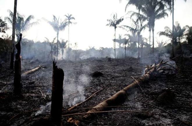 Những hình ảnh đau đớn vì cháy rừng Amazon - Ảnh 5.