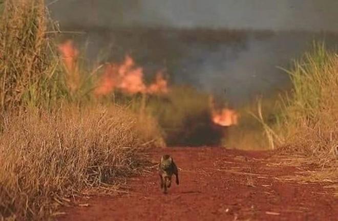 Những hình ảnh đau đớn vì cháy rừng Amazon - Ảnh 6.