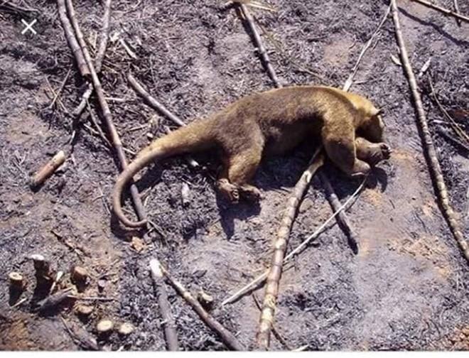 Những hình ảnh đau đớn vì cháy rừng Amazon - Ảnh 8.