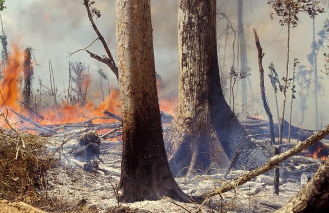 Những hình ảnh đau đớn vì cháy rừng Amazon - Ảnh 11.