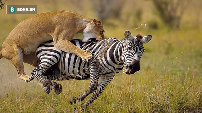 Ngựa giật nảy mình khi sư tử xuất hiện, điều gì đã giúp nó sống sót? - Ảnh 1.