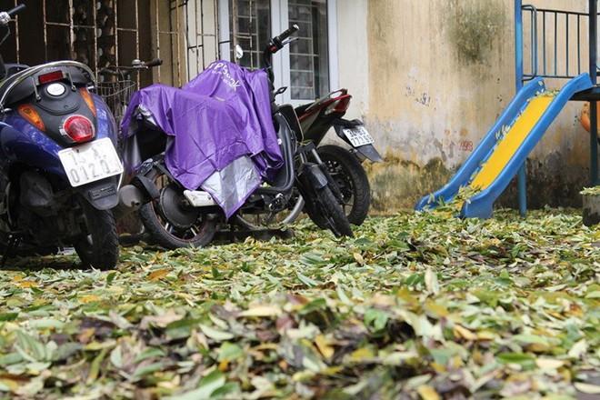 Hàng cây sưa quý ở Hà Nội bất ngờ rụng lá sau khi từ chối bán - Ảnh 11.