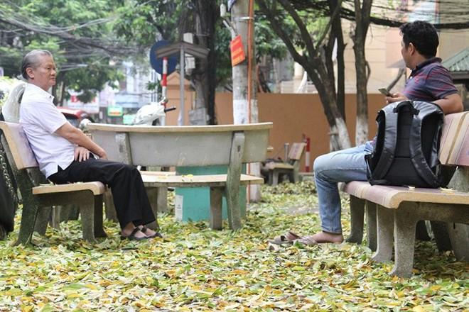 Hàng cây sưa quý ở Hà Nội bất ngờ rụng lá sau khi từ chối bán - Ảnh 5.