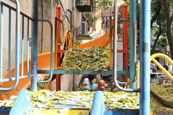 Hàng cây sưa quý ở Hà Nội bất ngờ rụng lá sau khi từ chối bán - Ảnh 10.