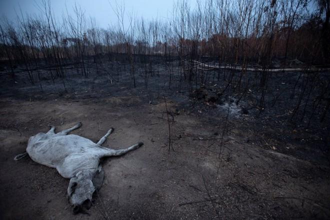 Ám ảnh cảnh rừng mưa Amazon chìm trong bão lửa - Ảnh 9.