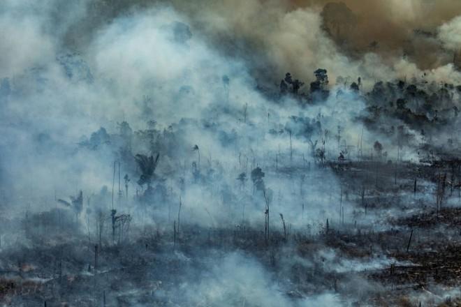 Ám ảnh cảnh rừng mưa Amazon chìm trong bão lửa - Ảnh 10.