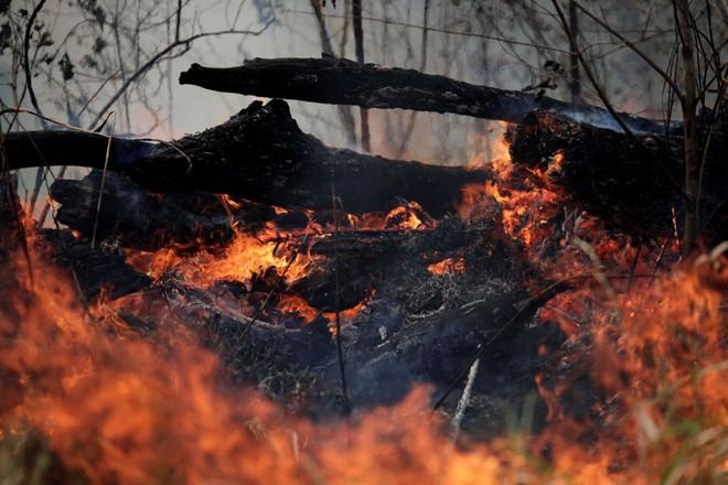 Ám ảnh cảnh rừng mưa Amazon chìm trong bão lửa - Ảnh 2.