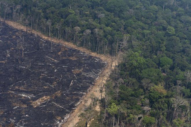 Ám ảnh cảnh rừng mưa Amazon chìm trong bão lửa - Ảnh 3.