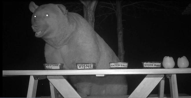 Không thể ngăn gấu trộm mật, ông chủ trại ong liền biến chúng thành chuyên gia ẩm thực rồi thu về kết quả trên cả tuyệt vời - Ảnh 4.