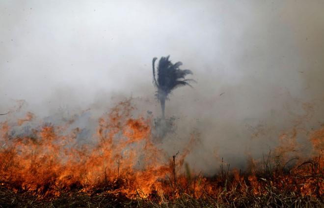 Ám ảnh cảnh rừng mưa Amazon chìm trong bão lửa - Ảnh 4.