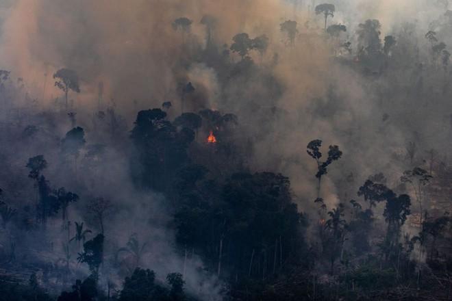 Ám ảnh cảnh rừng mưa Amazon chìm trong bão lửa - Ảnh 5.