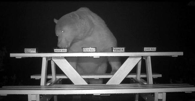 Không thể ngăn gấu trộm mật, ông chủ trại ong liền biến chúng thành chuyên gia ẩm thực rồi thu về kết quả trên cả tuyệt vời - Ảnh 6.