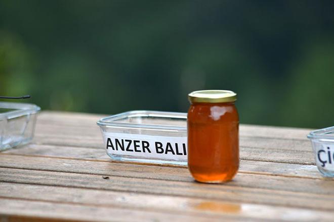 Không thể ngăn gấu trộm mật, ông chủ trại ong liền biến chúng thành chuyên gia ẩm thực rồi thu về kết quả trên cả tuyệt vời - Ảnh 7.