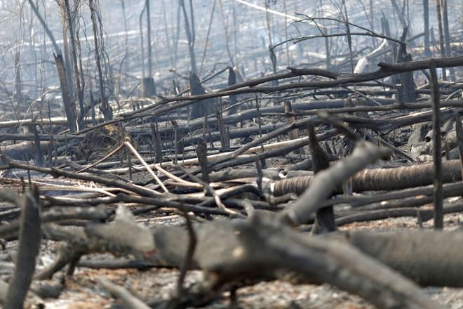Ám ảnh cảnh rừng mưa Amazon chìm trong bão lửa - Ảnh 7.