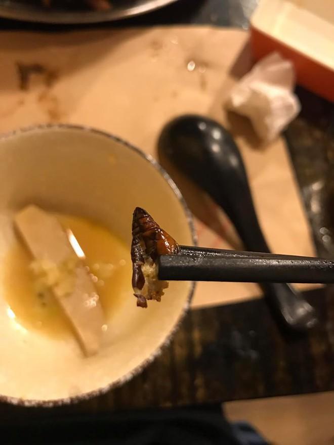 Cắn phải con gián béo ngậy trong nồi lẩu ở nhà hàng Nhật, cô gái hãi hùng đăng đàn nhưng dân mạng có thái độ bất ngờ - Ảnh 2.