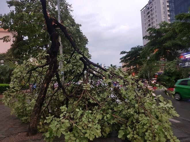 Mưa giông dữ dội từ cuối chiều ở Hà Nội, 1 nam thanh niên bị cây si đổ trúng tử vong - Ảnh 29.