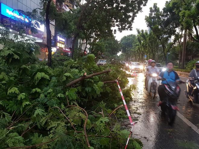 Mưa giông dữ dội từ cuối chiều ở Hà Nội, 1 nam thanh niên bị cây si đổ trúng tử vong - Ảnh 20.