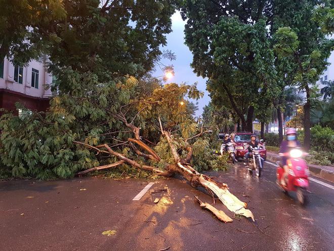 Mưa giông dữ dội từ cuối chiều ở Hà Nội, 1 nam thanh niên bị cây si đổ trúng tử vong - Ảnh 16.