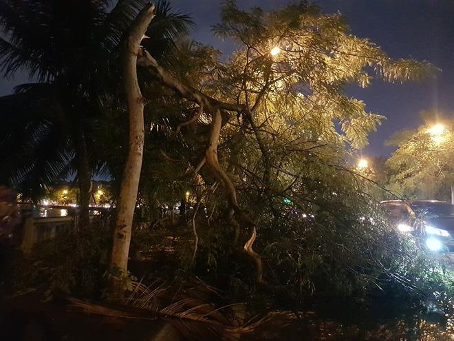 Mưa giông dữ dội từ cuối chiều ở Hà Nội, 1 nam thanh niên bị cây si đổ trúng tử vong - Ảnh 15.