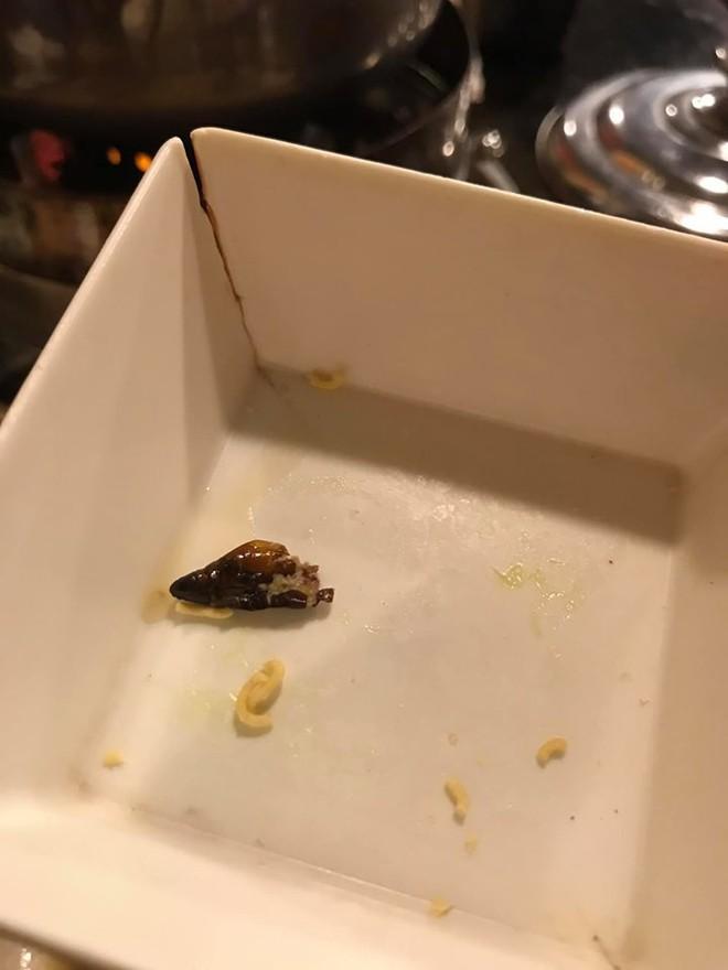 Cắn phải con gián béo ngậy trong nồi lẩu ở nhà hàng Nhật, cô gái hãi hùng đăng đàn nhưng dân mạng có thái độ bất ngờ - Ảnh 3.