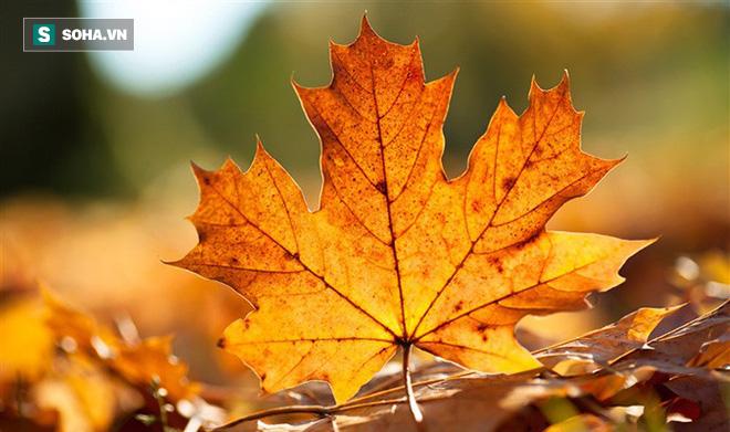 Đông y gợi ý 4 nguyên tắc dưỡng sinh mùa thu: Người làm được sẽ đỡ ốm đau bệnh tật - Ảnh 1.