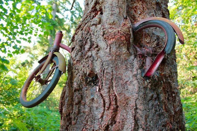 Thiên nhiên không chỉ đẹp mà còn kỳ lạ đến không tưởng (P2): Cây xanh nuốt chửng xe đạp - Ảnh 9.