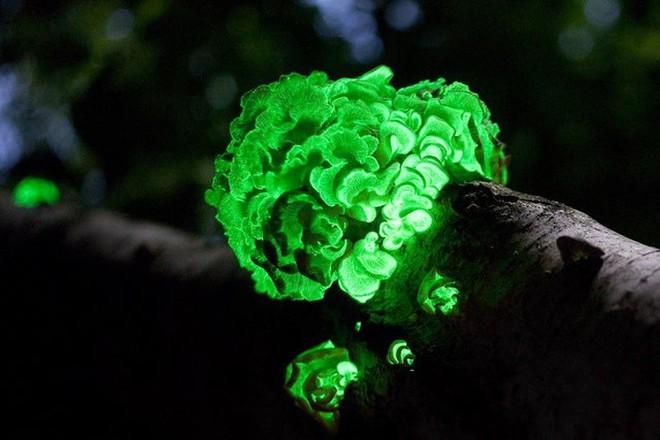 Thiên nhiên không chỉ đẹp mà còn kỳ lạ đến không tưởng (P1): Rồng xanh tí hon có thật - Ảnh 7.