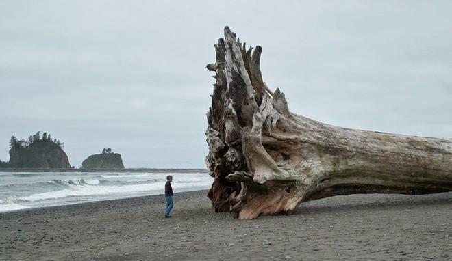 Thiên nhiên không chỉ đẹp mà còn kỳ lạ đến không tưởng (P1): Rồng xanh tí hon có thật - Ảnh 5.