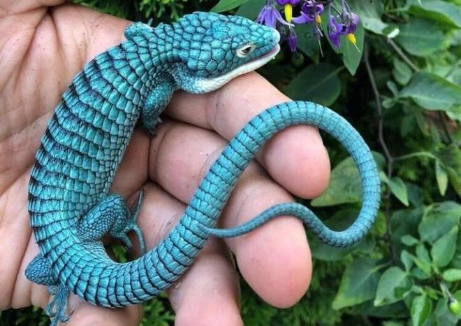 Thiên nhiên không chỉ đẹp mà còn kỳ lạ đến không tưởng (P1): Rồng xanh tí hon có thật - Ảnh 3.