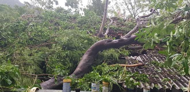 Hàng loạt cây đổ, nhà cửa tan hoang sau khi bão số 4 đổ bộ vào Nghệ An - Hà Tĩnh - Ảnh 11.