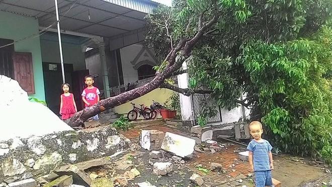 Hàng loạt cây đổ, nhà cửa tan hoang sau khi bão số 4 đổ bộ vào Nghệ An - Hà Tĩnh - Ảnh 10.