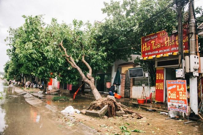Hàng loạt cây đổ, nhà cửa tan hoang sau khi bão số 4 đổ bộ vào Nghệ An - Hà Tĩnh - Ảnh 6.