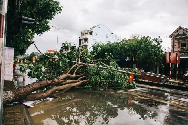 Hàng loạt cây đổ, nhà cửa tan hoang sau khi bão số 4 đổ bộ vào Nghệ An - Hà Tĩnh - Ảnh 5.
