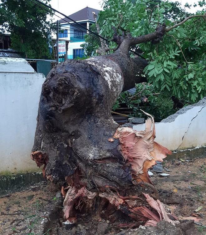 Hàng loạt cây đổ, nhà cửa tan hoang sau khi bão số 4 đổ bộ vào Nghệ An - Hà Tĩnh - Ảnh 7.