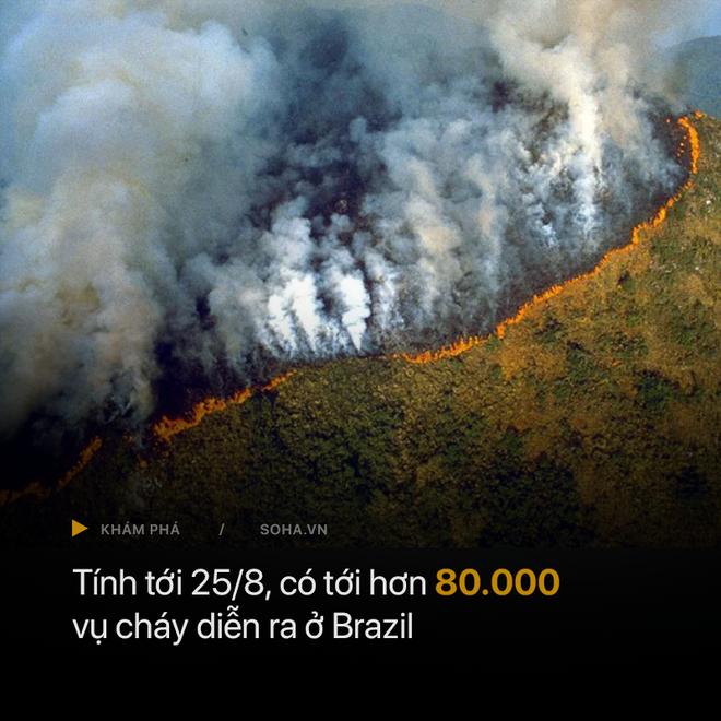 GĐ truyền thông Đài quan sát khí hậu Brazil trả lời báo Việt Nam: Tổng thống chỉ đang dùng thuốc giảm đau mà thôi! - Ảnh 2.