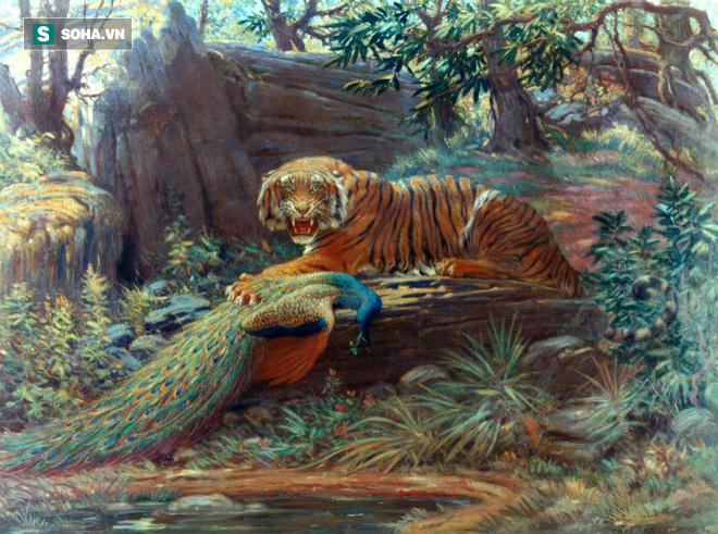 Hổ và chim công. Ảnh: Charles R. Knight