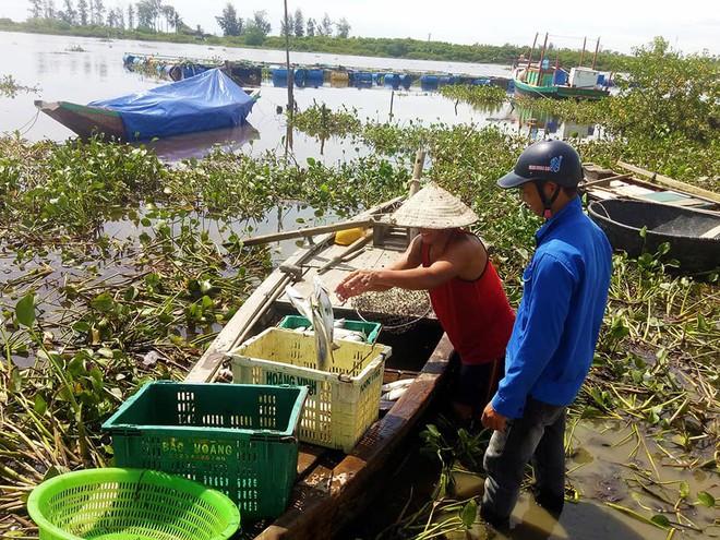 Xuất hiện thêm hàng tấn cá chết nổi trắng sông ở Hà Tĩnh - Ảnh 2.