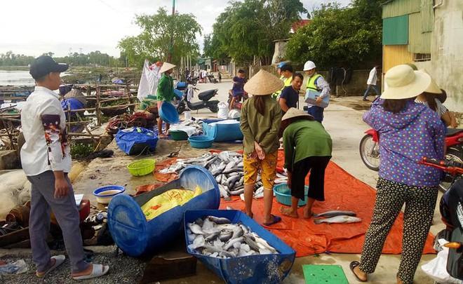 Vụ cá chết hàng loạt trên sông: Do độ mặn giảm đột ngột làm cá bị sốc - Ảnh 3.